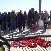 Mohnblumenkränze - britisches Symbol des Gedenkens an den Ersten Weltkrieg